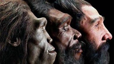 Homo sapiens-Шкільне життя